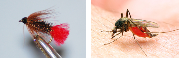 Comparison of a gnat and artificial fly