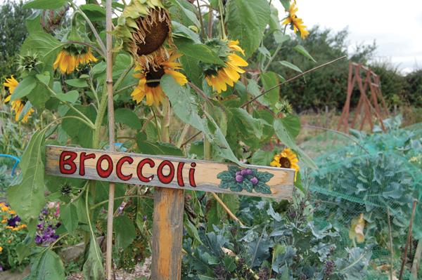 Broccoli Sign Pocket Farm Magazine