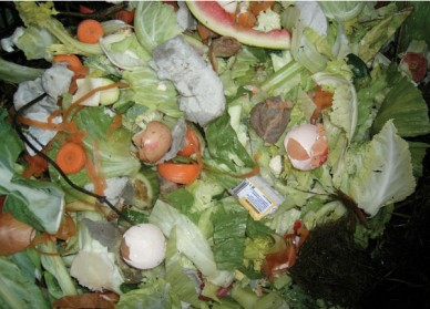 Good compost ingredients