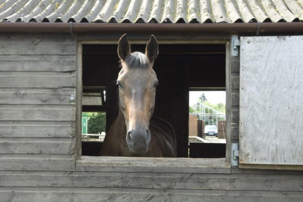 Oaklands Web Horse Pocket Farm Magazine