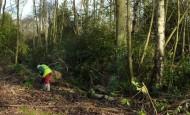 Woodland Work
