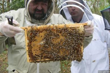 Beekeeper's buddy