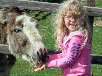 Petting Zoo Donkey