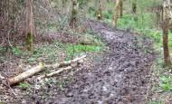 Muddy Path Wishtree Wood