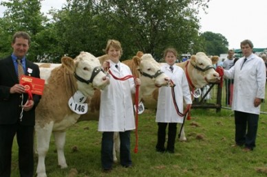 Simmental show line up