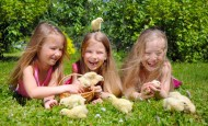 Easter chicks with children