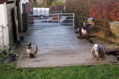 Goat hardstanding area