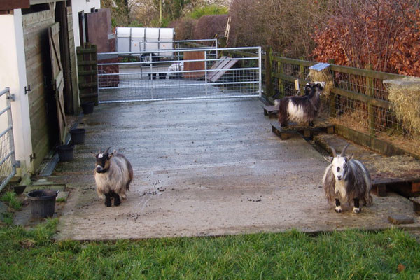 Pygmy goats part 2: housing and other facilities | Pocket Farm Magazine