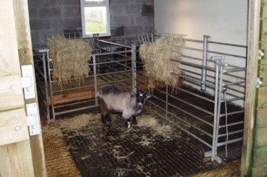 Pygmy Goats Part 2 Housing And Other Facilities Pocket