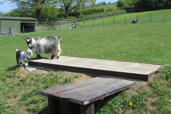 Pygmy goat house plans - House and home design