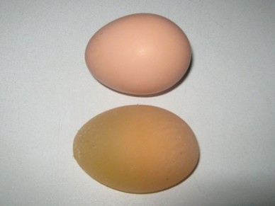 Soft-shelled egg
