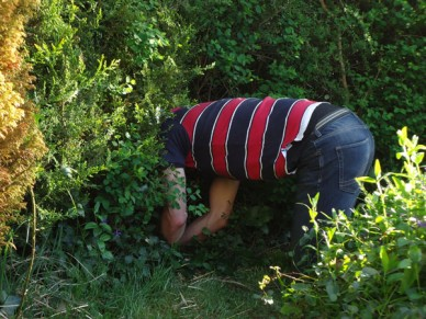 Searching for eggs in a bush