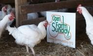 Open Farm Sunday