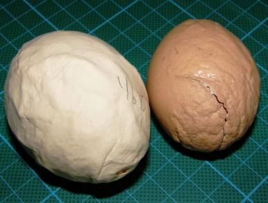 Wrinkled egg