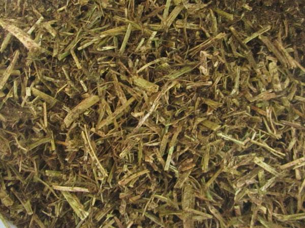 Alfa-a alfalfa