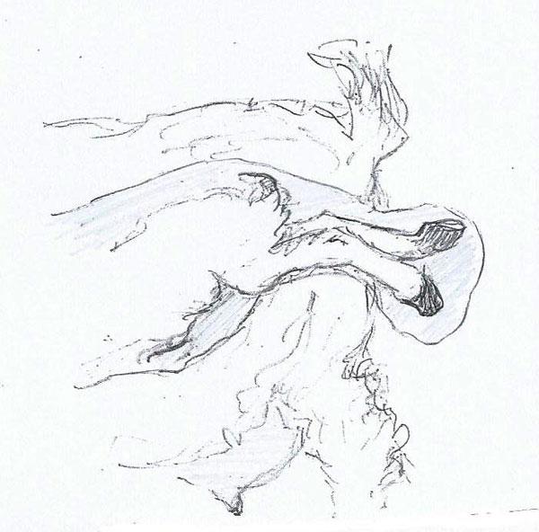 Pygmy goat posterior presentation