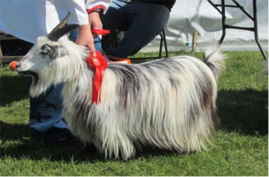 best-in-show-breed