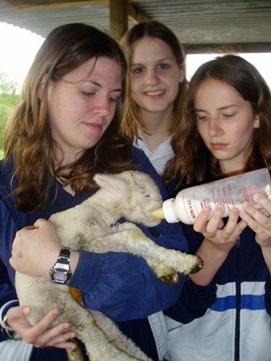 lancingcollege9_feeding_lamb