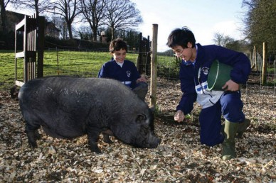 lancingcollege_pigs_600