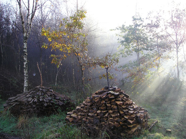 Woodstacks for charcoal