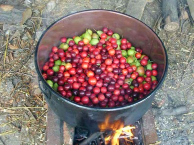 boiling fruit to make fruit leather