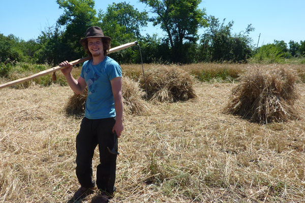 Scything the wheat