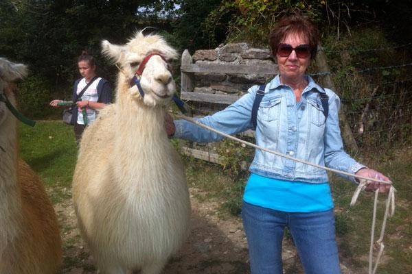 Llama treking in Cornwall