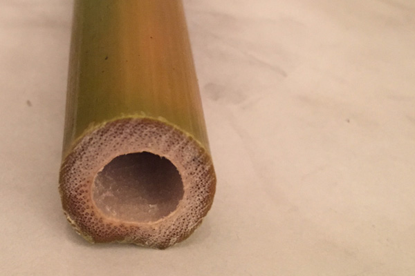 Freshly cut bamboo for the flute project