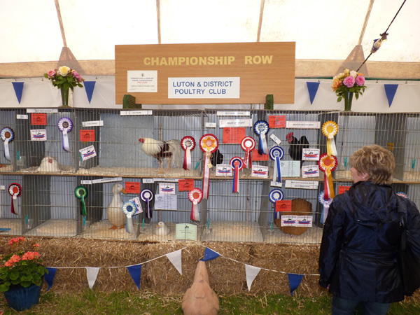 Championship row at a county show