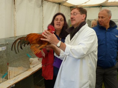 Judging at a poultry show