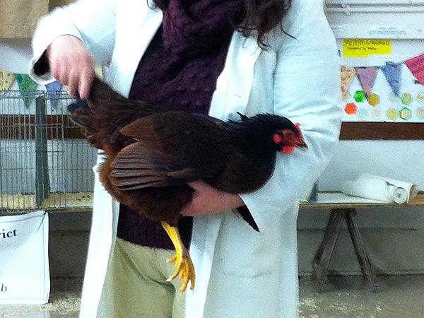 Handling a bird for judging