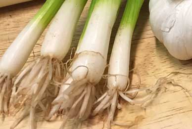 Spring onions ready to go in a salad