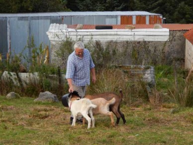 Chris feeding the goats