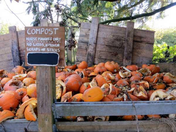 Compost heap with pumpkins