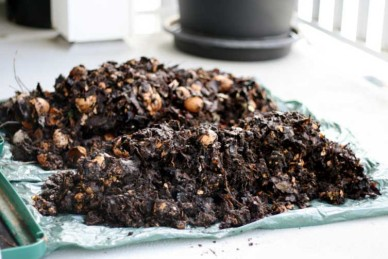 Rich dark homemade compost - Source: Lindsay.dee.bunny
