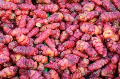 Oca or New Zealand Yam